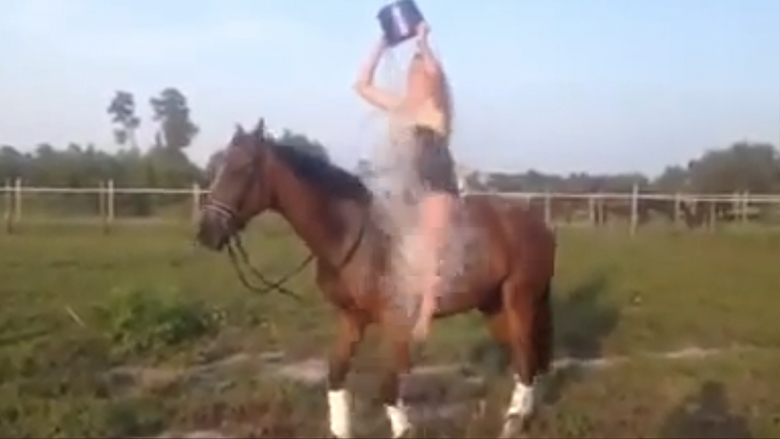 1,5 Millionen Views auf YouTube: Der Horse Epic Fail.