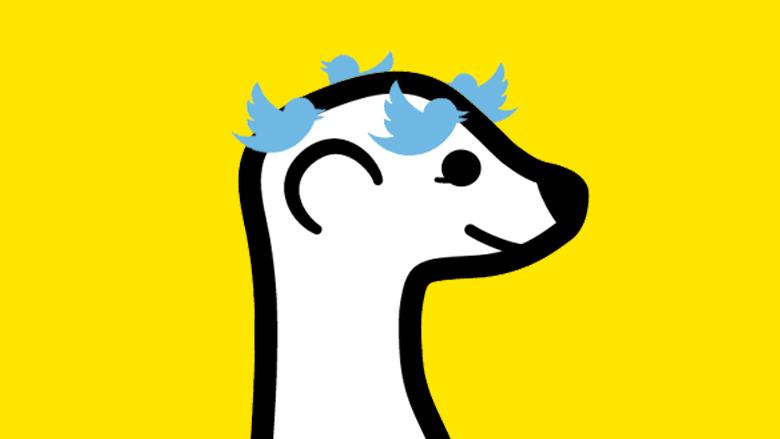Meerkat schwirrt momentan der Kopf, nicht nur wegen Twitter. © Meerkat, Twitter, Montage: J. Steinschaden